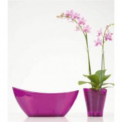 Obal orchidejový 230 Clear Violet 37