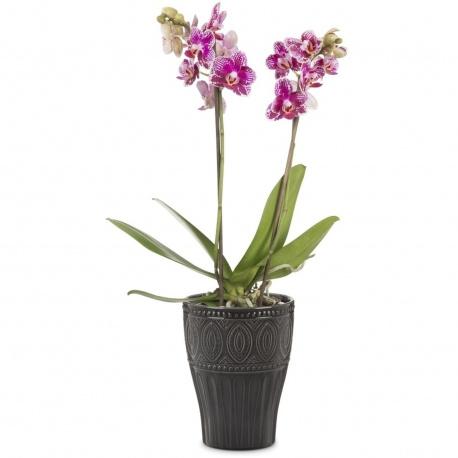 Obal orchidejový 674 Glass Grey 17
